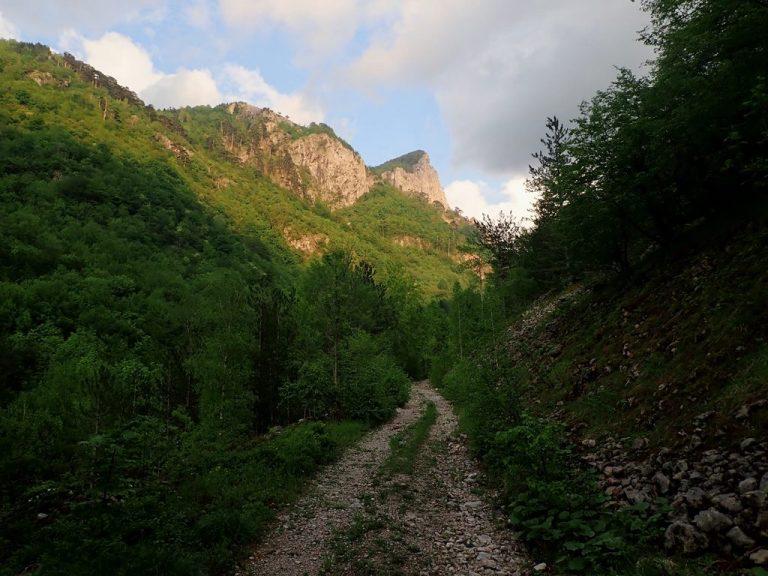 Peručica primeval forest, strict nature reserve