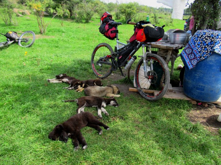 Stopped by the shepherds for small refreshment. Look to our bike guards, they all fell asleep :)