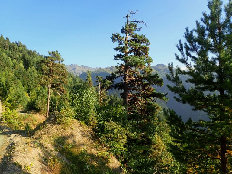 Svaneti Range - view from Zuruldi Ridge.