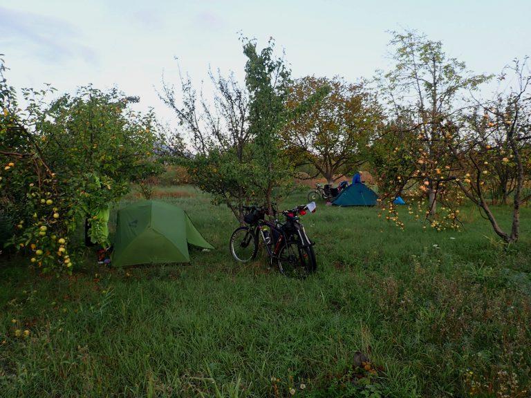 Sleeping in apple orchard.