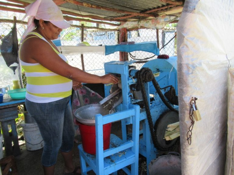 Fresh guarapa , sugarcane juice.