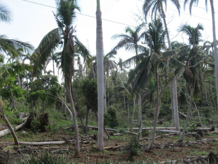 Every year from June to November is the hurricane season. The wooden houses and palm forests swept away like matches.