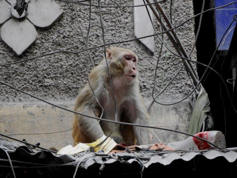 This is not a zoo, still Chawri bazaar.