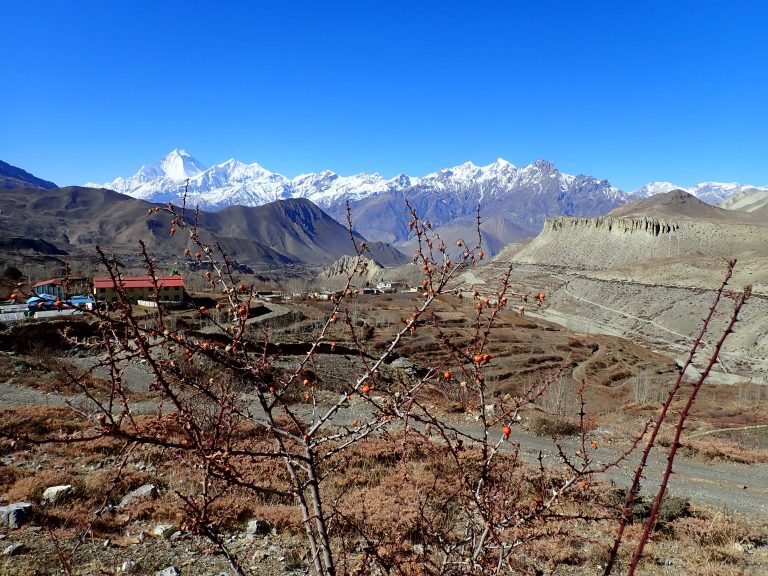 A place where acclimatization walks up to 4800 m will become a recreation :)..., Muktinath valley with Dhaulagiri massif.